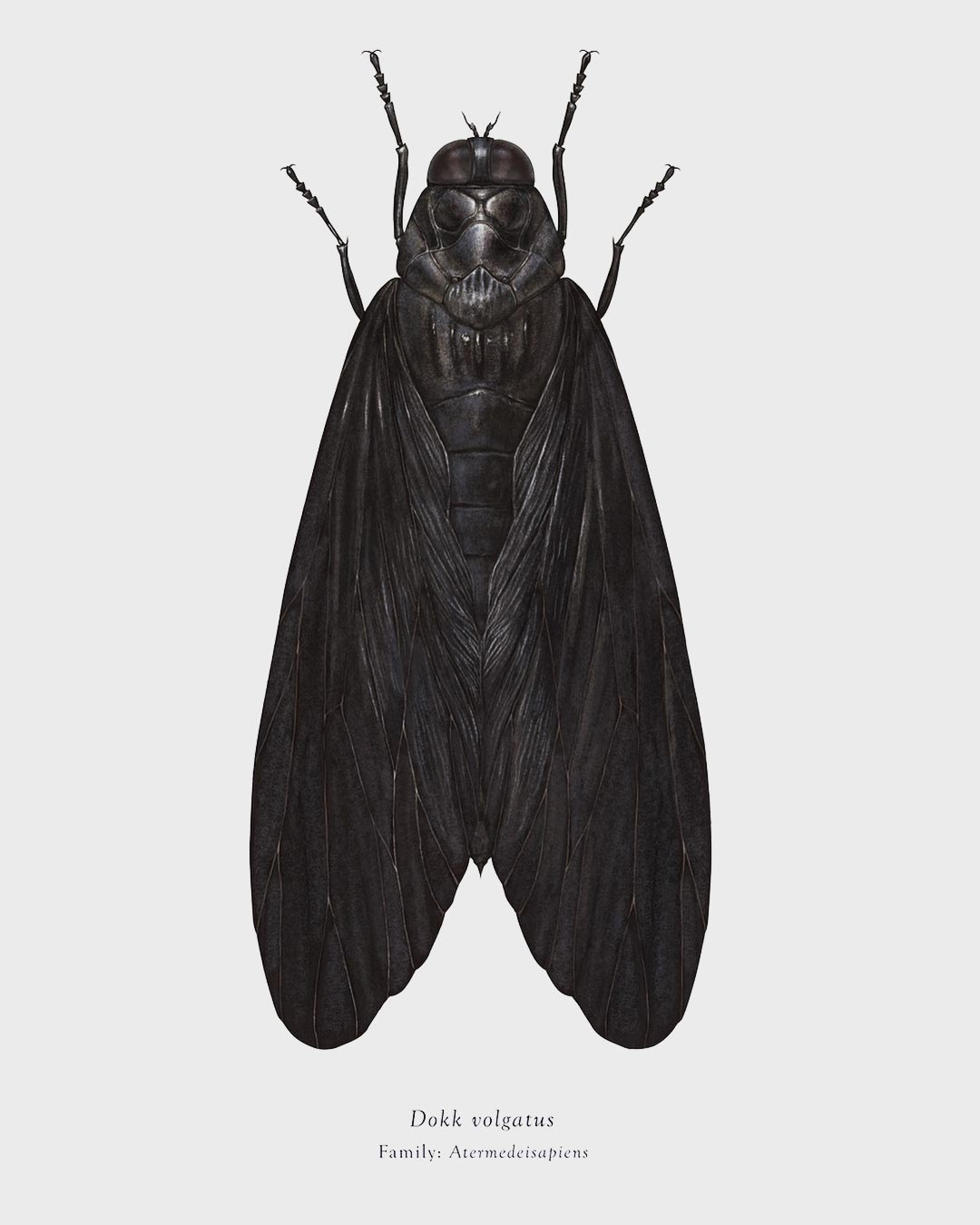 Dokk volgatus, Arthropoda Iconicus