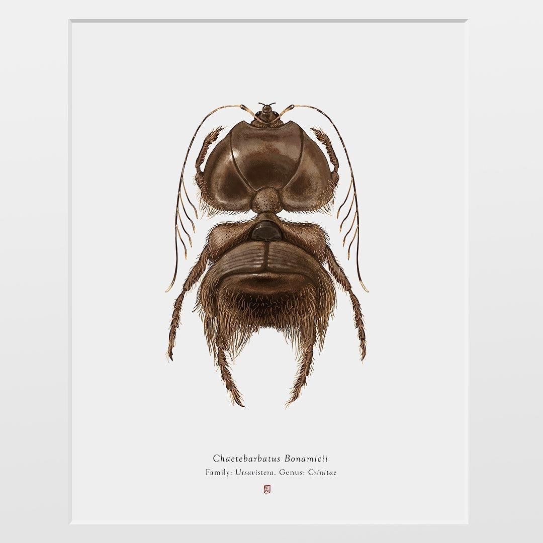 Chaetebarbatus Bonamicii, Arthropoda Iconicus