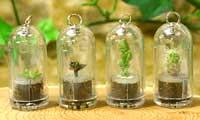 I portachiavi bonsai