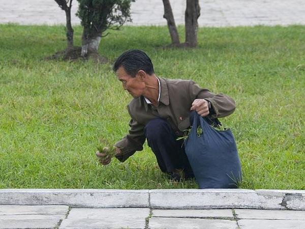 Un uomo raccoglie erba da mangiare in Corea del Nord