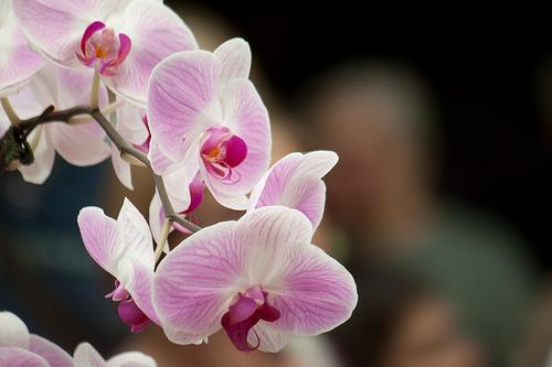 Orchidee a Euroflora