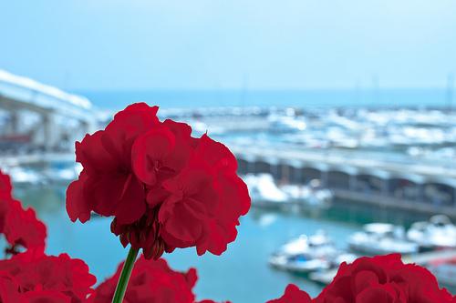 Uno sguardo sulla Fiera di Genova da Euroflora