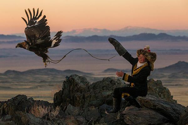 Falconiera mongola