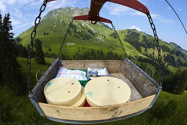 Trasporto del formaggio svizzero
