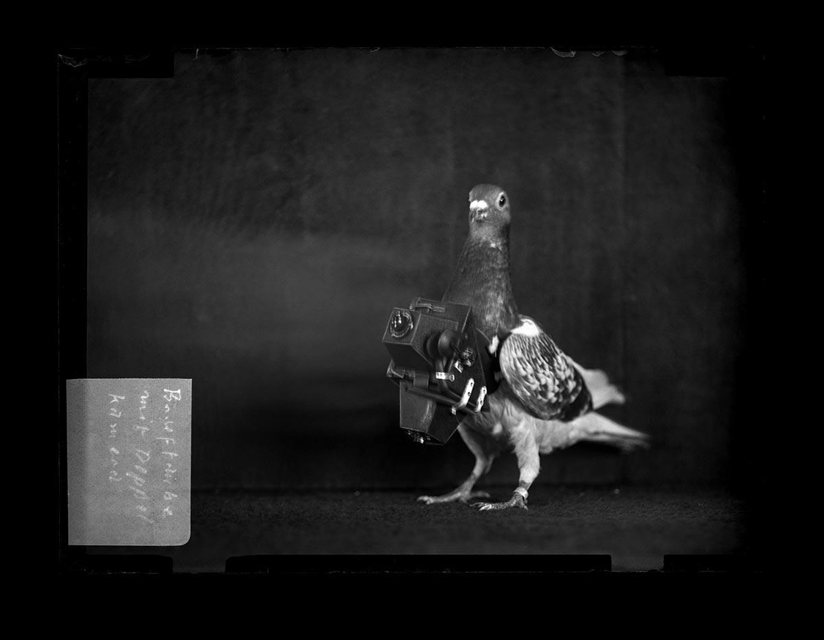 Un piccione con la macchina fotografica di Julius Neubronner
