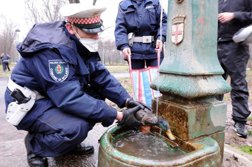 Un vigile urbano soccorre un germano reale nell'area inquinata del Lambro