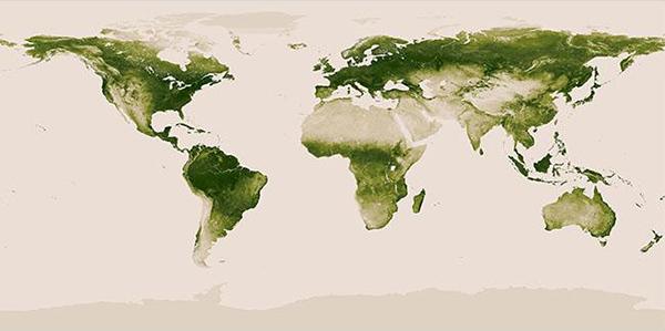 La flora terrestre in una mappa