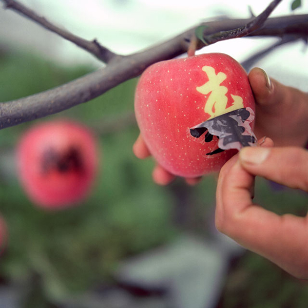 Una mela tatuata