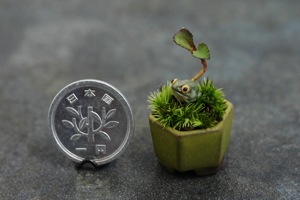 Un mini bonsai