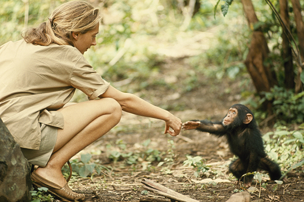 Jane Goodall in Tanzania