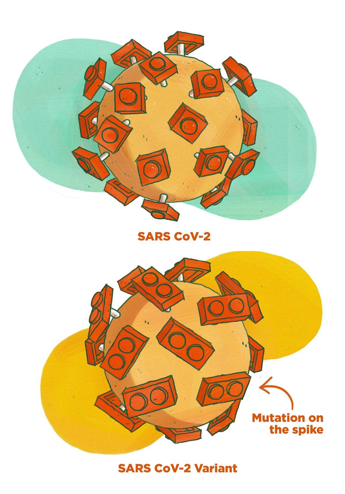 Le varianti di SARS-CoV-2 disegnate da Meredith Miotke