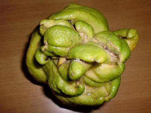 Il limone mutante di Terzigno