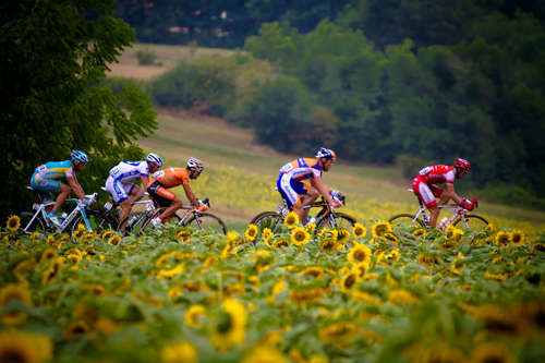 Il Tour de France e i girasoli
