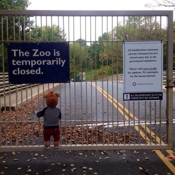 Un bambino guardo lo zoo chiuso per lo shutdown 2013