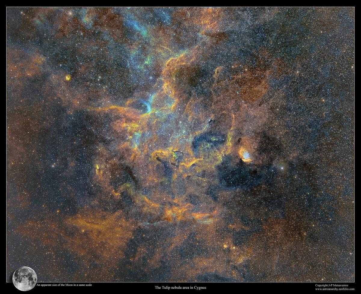 Un dettaglio della nebulosa Tulipano fotografata da J-P Metsavainio