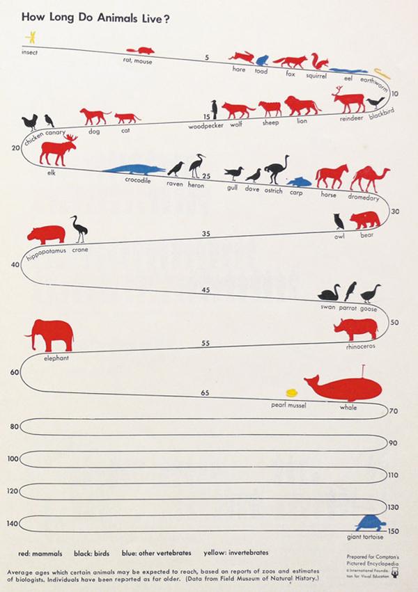 Infografica sull'aspettativa di vita degli animali
